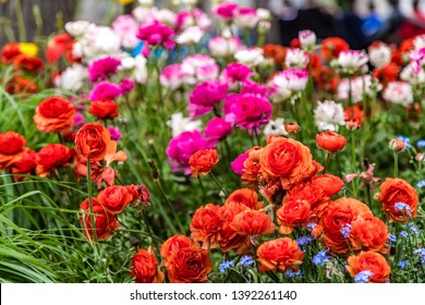 bed of colorful flowers in green garden
