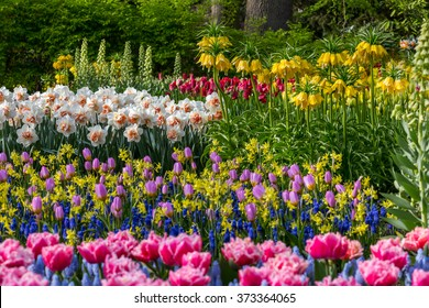 Bed of colorful flowers and tulips and narcissus in the garden