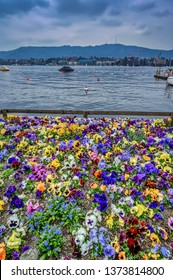 A bed of pansies add color to a view of lake Zurich in spring