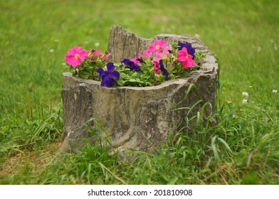 Bed of petunias in the form of a tree stump