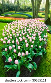 a bed of pink tulips and trees