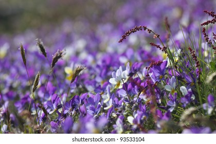 A bed of purple flowers in a sunny hill.
