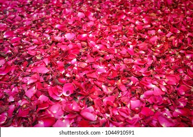 Bed of purple and red rose petals as background