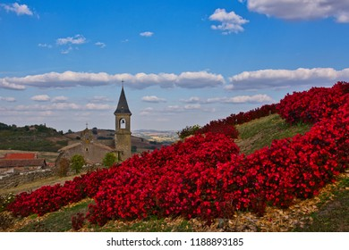 A bed of red begonias on a hillside with the church of Lautrec in the distance