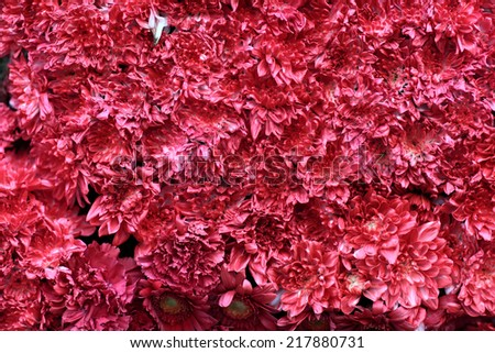 Bed Red Flowers Background Stock Photo Edit Now 217880731
