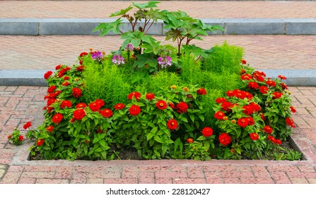 bed with red flowers in the city