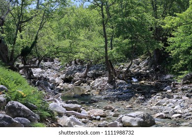 the bed of a river surrounded by centuries-old trees in Samothraki island ,  Greece