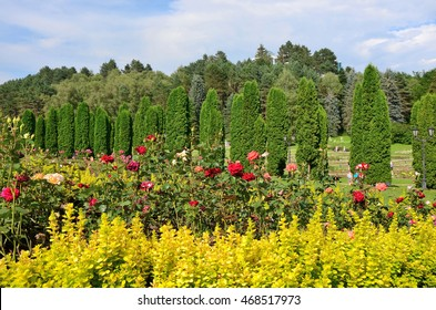 A bed of roses and cypress Avenue in the rose Valley. Kislovodsk Resort Park. The Caucasus mountains.