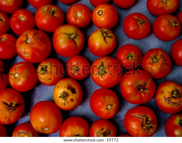 bed of tomatoes