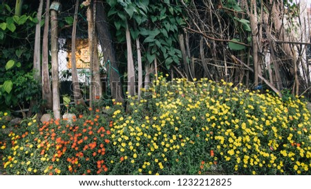 Bed Yellow Red Portulaca Flowers Stock Photo Edit Now 1232212825
