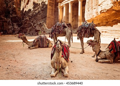 Bedouin camels resting near the treasury Al Khazneh, Jordan, Petra.