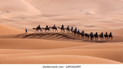 Bedouin leads a caravan of camels with tourists on a tour of the Sahara desert, Morocco