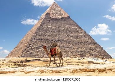 Bedouin on camel near Pyramid of Khafre or of Chephren in Giza, Egypt