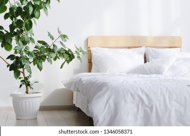 Bedroom interior with white bed and big indor flower