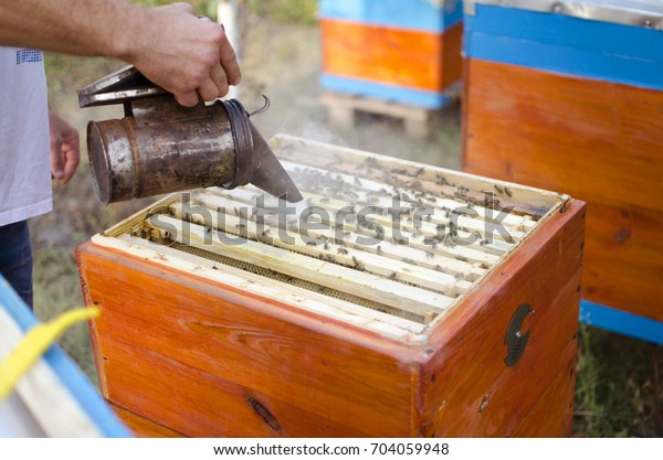 Bee apiary with bee colony in the garden. Beekeeping  in summer. Beekeeper gets a honey