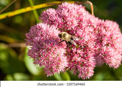 Bee at its best working for a living