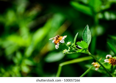 A bee is collecting honey in the field.