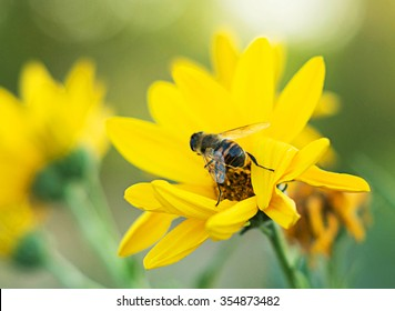 A bee collecting nectar from flower. Landscape background