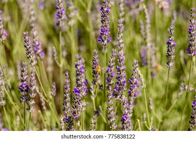 A bee is collecting pollen from a lavender flower in a bright colorful scene