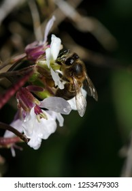Bee collecting pollen on white and red flower