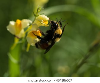 Bee collecting pollen from a yellow wildflower