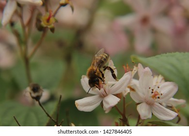 The bee collects the nektar from a blossom