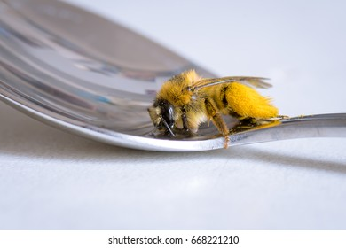 Bee drinking water from a spoon and is fed by the spoon