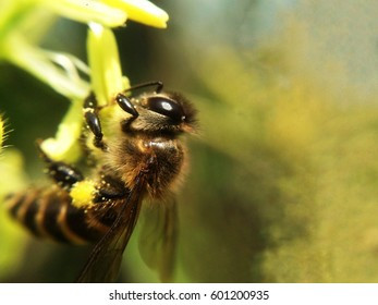 Bee a finding sweet water and collecting pollen from flowers.