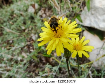 bee and flover