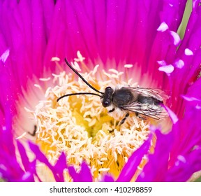 bee in the flower