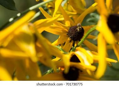 Bee in a flower jungle
