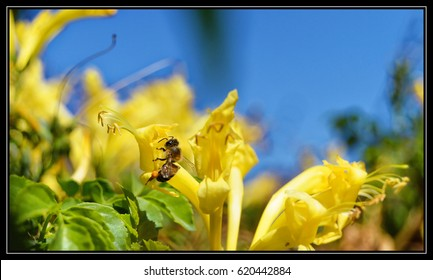 Bee, flower, pollinating, pollination