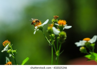 Bee with flowers,Bee ,insect.