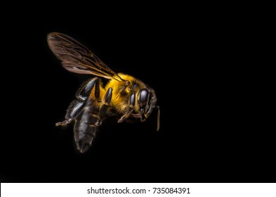 Bee flying on black background
