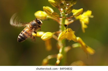 Bee flying towards a yellow flower