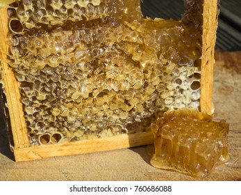 Bee frame with honey.