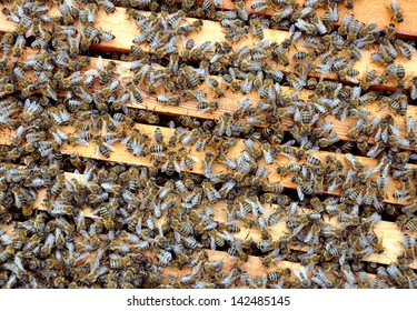 bee frames with bees