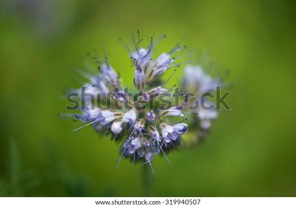 Bee friend flower