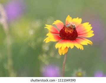 Bee gathering honey on alone flower in summer time