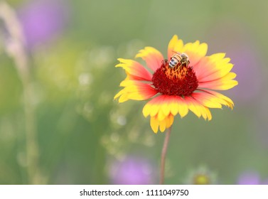 Bee gathering honey on alone flower in summer steppe