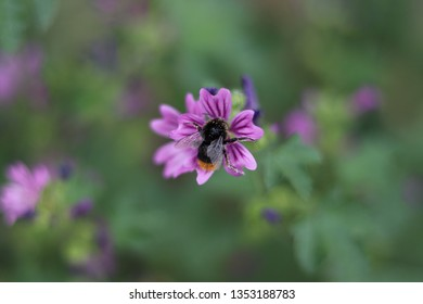 Bee harvesting pollen from a flower