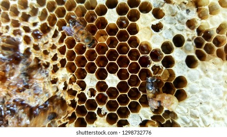 Bee hive with bees working and Bee peaking in bee hive