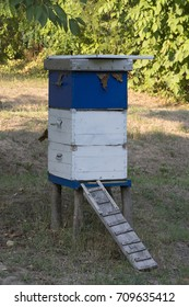 Bee hive in the yard of the house