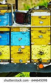 Bee hives are arranged in rows