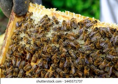 Imágenes, fotos de stock y vectores sobre Hive | Shutterstock