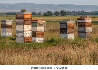 Bee hives in Central Otago, new Zealand.