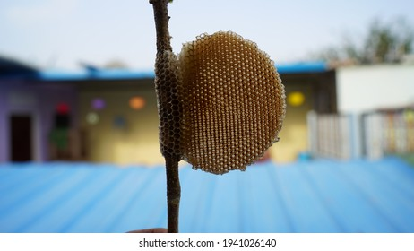 Bee hives closeup shot. Desert Honey comb on a wooden stick with blurred background. Micro holes on honey comb with attractive honey cells.