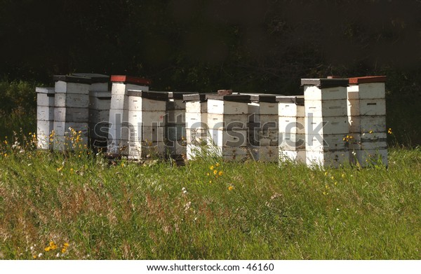 bee hives at the edge of a farmer's field