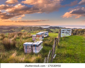 Bee Hives in Many Colors in Hilly Landscape
