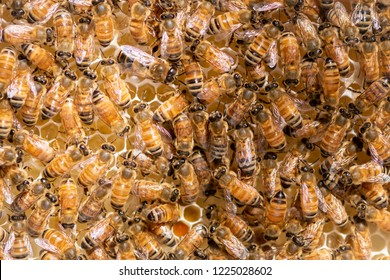 Bee hives on a bee hive frame
